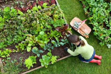 Image result for Lifestyle in gardening home tips